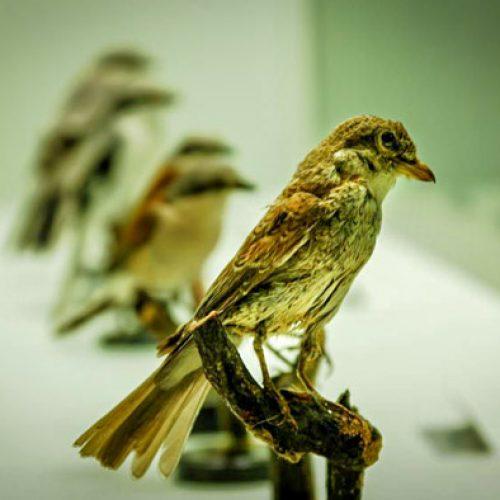 """Museo Ornitologico e di Scienze Naturali """"L. Scanagatta"""" a Varenna"""