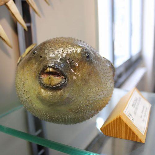 Museo Civico di Storia Naturale Don M. Ambrosioni a Merate